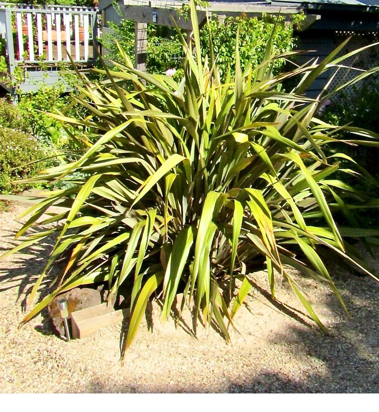 In your local garden with Glen Heyne Gardens: Summer friends or foe?