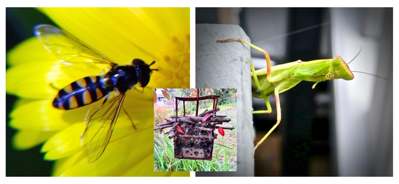 Glen about the house – It's only natural to care about your garden and its inhabitants!