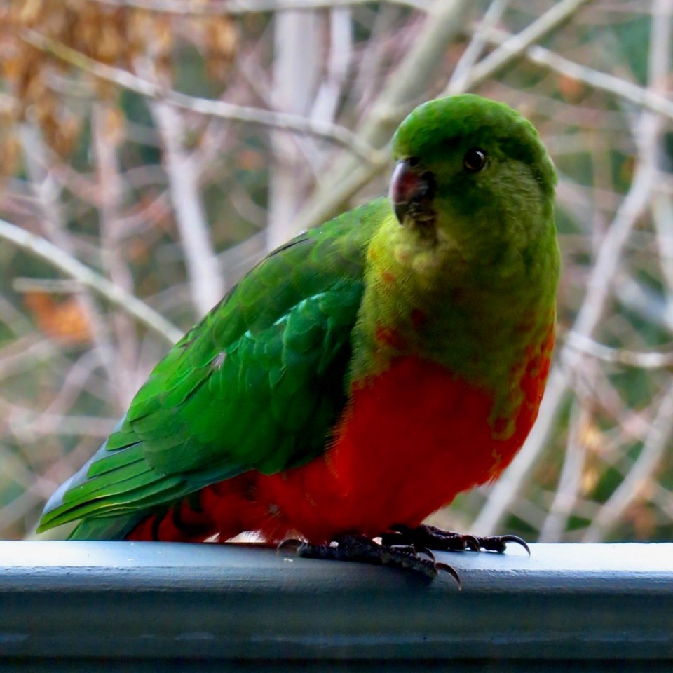 Glen, about the house- Fine feathered friends
