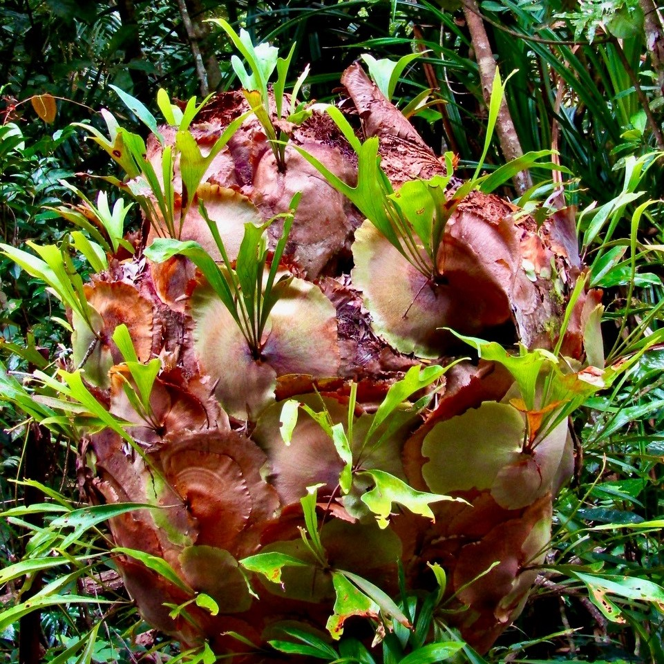 Up in the air with epiphytes – a whole new world of gardening