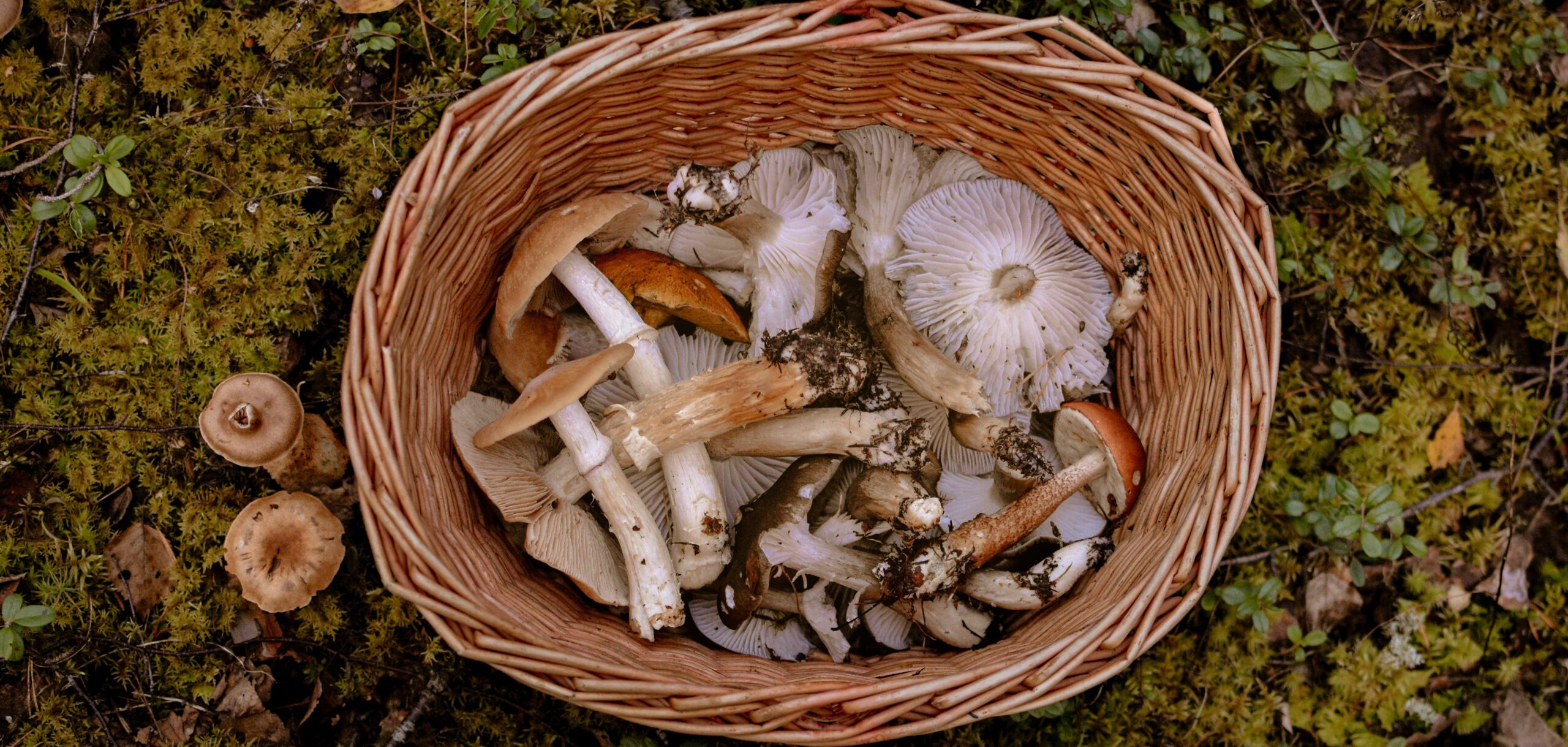 A fungus lover's foray        into fun foraging