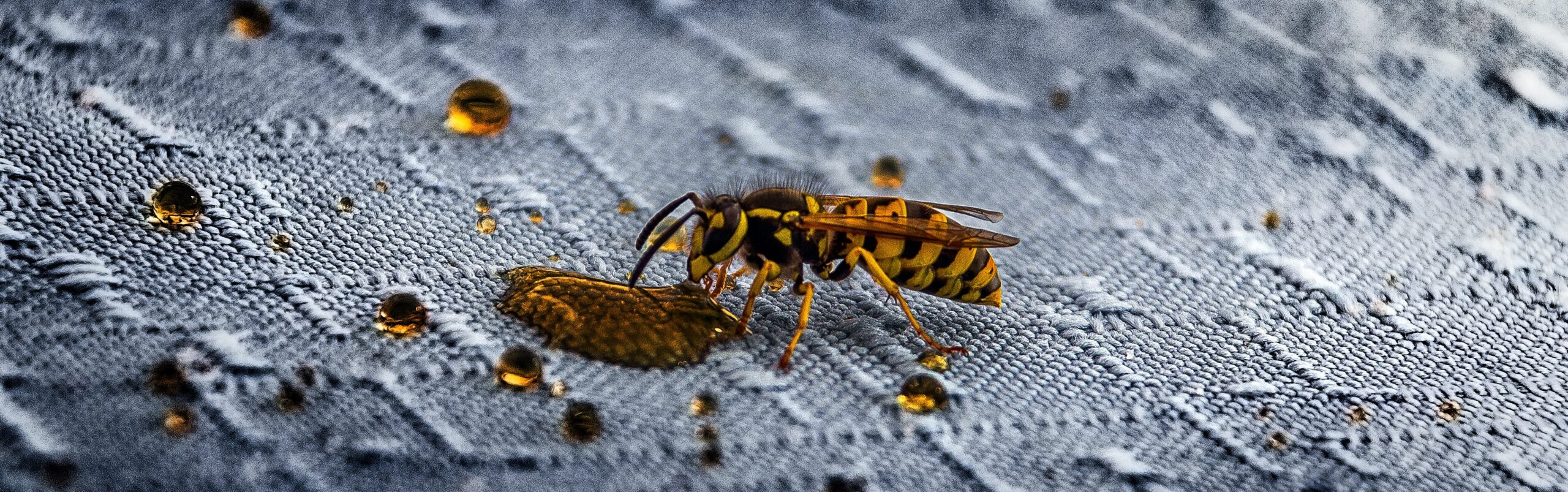 European wasps on the wane, or are they?