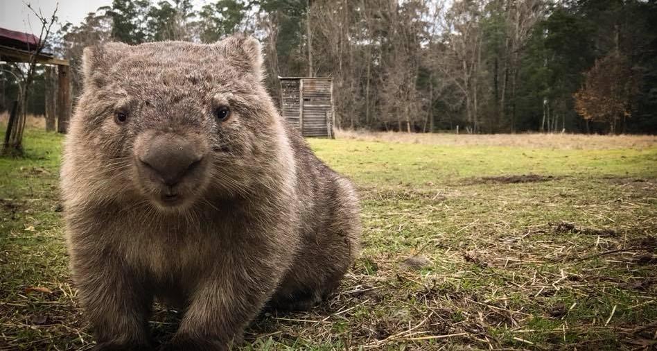 Wombat fundraiser